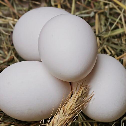 Яйцо куриное Халяль фабрики Кукареку, уп. 10 шт