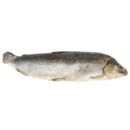 Северная якутская рыба Чир свежемороженый  (арт. СФИ)