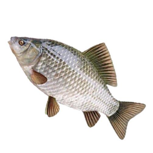 Северная якутская рыба Кобяйский карась  свежемороженый  (арт. СФИ)