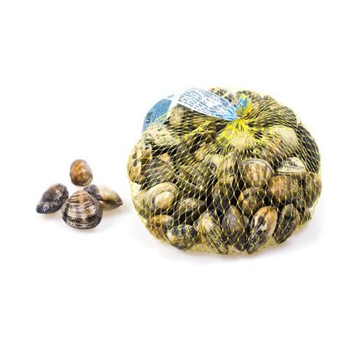 Морской петушок (Вонголе)  (арт. МПО 0034)