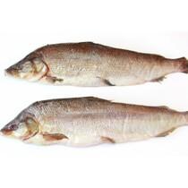 Северная якутская рыба Муксун свежемороженый