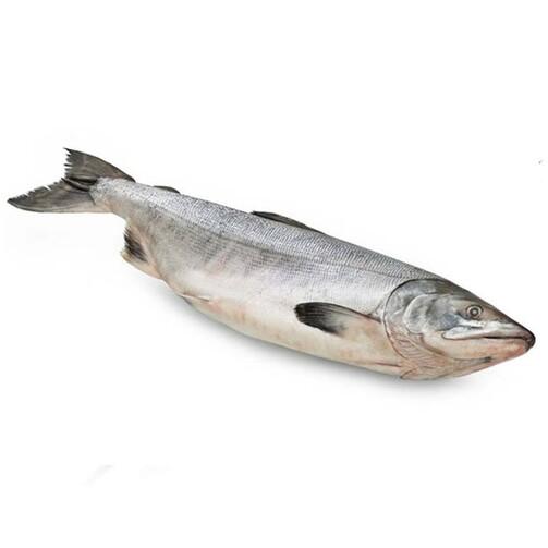 Северная якутская рыба Нельма свежемороженая  (арт. СФИ)