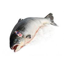 Охлажденный лосось тушка (Фарерские острова)