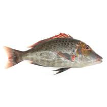 Рыба Летрин охл.