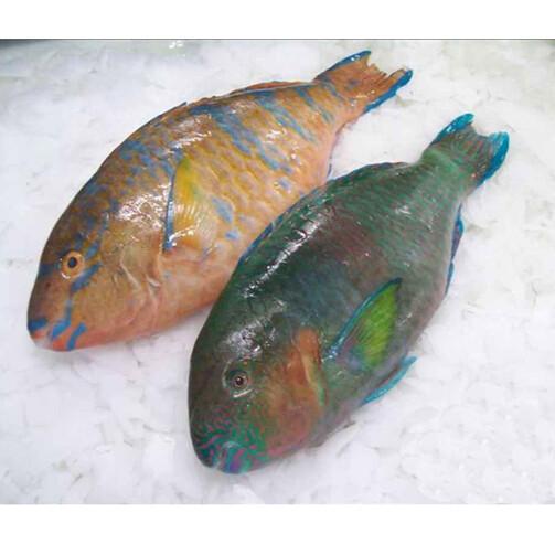 Рыба Попугай охл.  (арт. ПР 001)