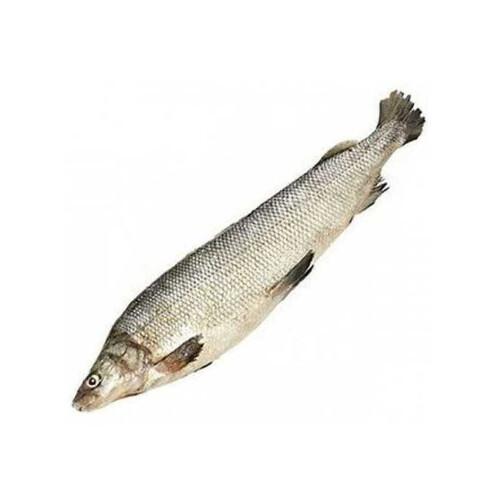 Северная якутская рыба Муксун свежемороженый  (арт. СФИ)