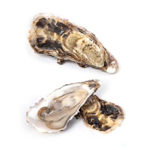 Живые устрицы Финн классические (Crassostrea Gigas)